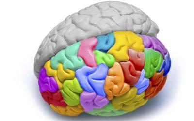 Kreativ eller konform? Hvilken type webdesign passer til din hjerne