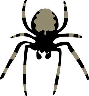 spider-150051_300